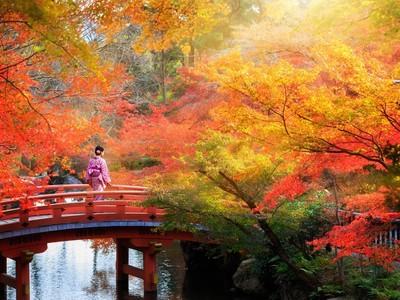 秋を感じる旅へ。日本の絶景「紅葉」特集