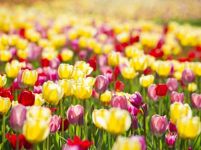 見渡す限り花!花!花!お花畑特集