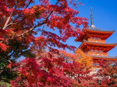 秋のロマンが詰まってる♡色鮮やかな京都旅特集