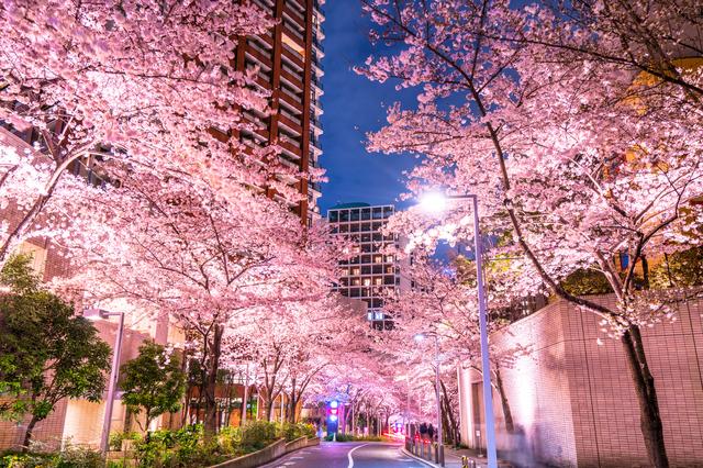 2018年春特別版!東京でお花見するならここ!テーマ別4選