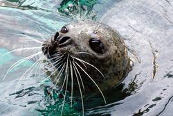 【そこはまるで海の楽園♪】東京のおすすめ水族館大特集!