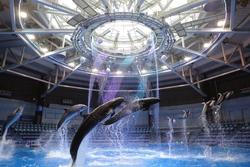 特別な感動体験!品川プリンスホテル内の水族館「アクアパーク品川」