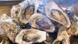 兵庫で牡蠣を食べるならここ!行くしかないおすすめ店6選◎
