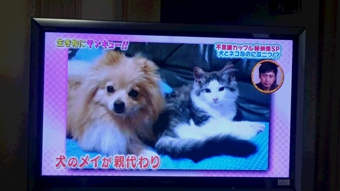 半野良猫ブログ【サ日記】すこ座りに挑戦! の巻の画像