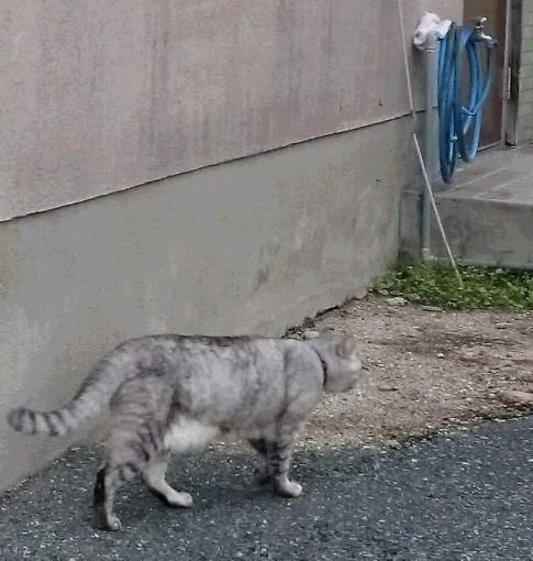 猫ブログ【サ日記】ホークス頼むよ の巻の画像