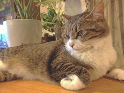 猫好きのオアシス♡伊豆にある猫宿で癒されよう!