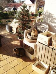 猫好きのオアシス♡伊豆の猫宿「オーベルジュはせべ」で癒されよう!