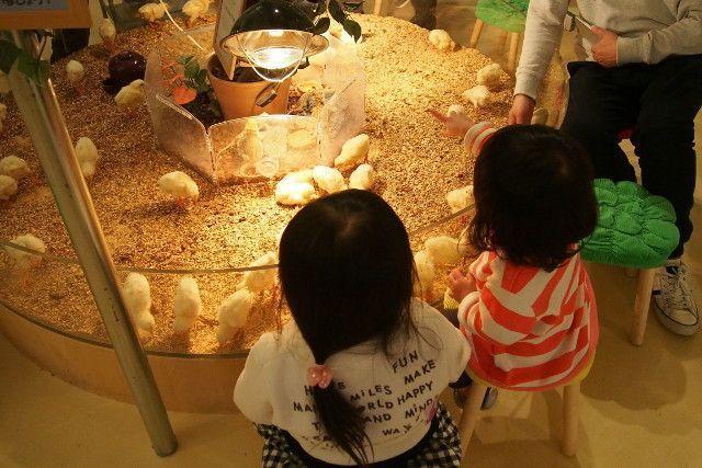 【デートから子ども連れまで】千葉のおすすめ遊び場6選♡の画像
