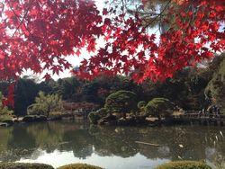 【必見】新宿の名所をご紹介!筆者おすすめインスタ映えスポット