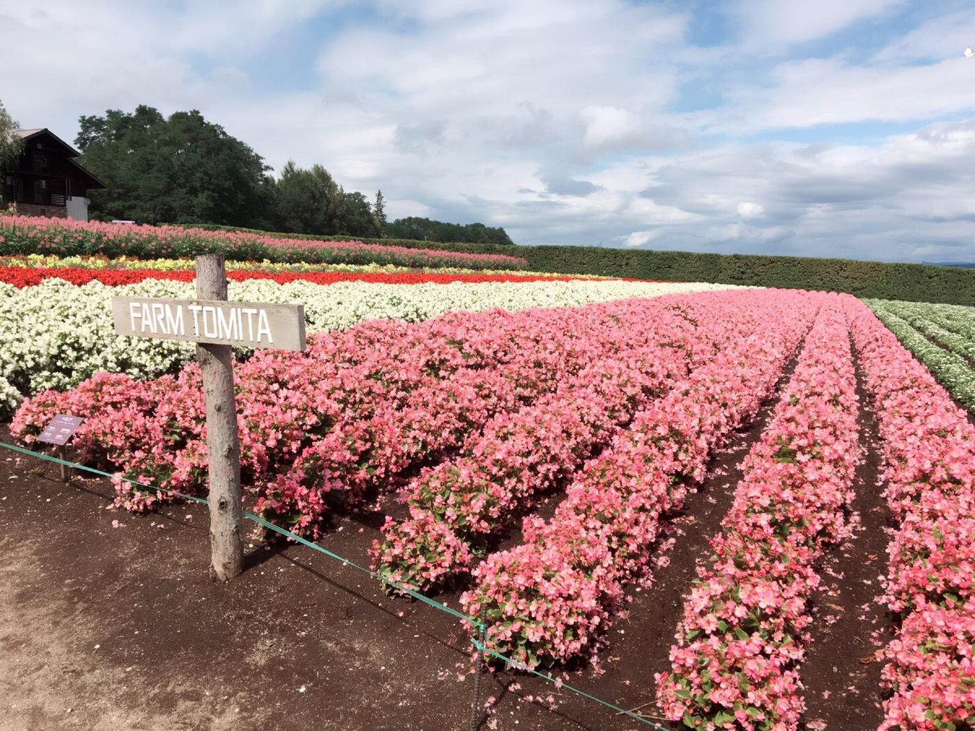 一度は訪れてみたい!北海道のおすすめ観光スポット♡の6枚目の画像の画像