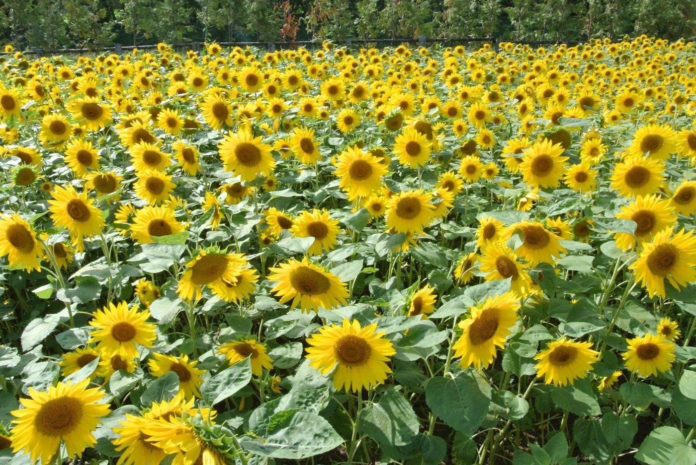 一度は訪れてみたい!北海道のおすすめ観光スポット♡の11枚目の画像の画像