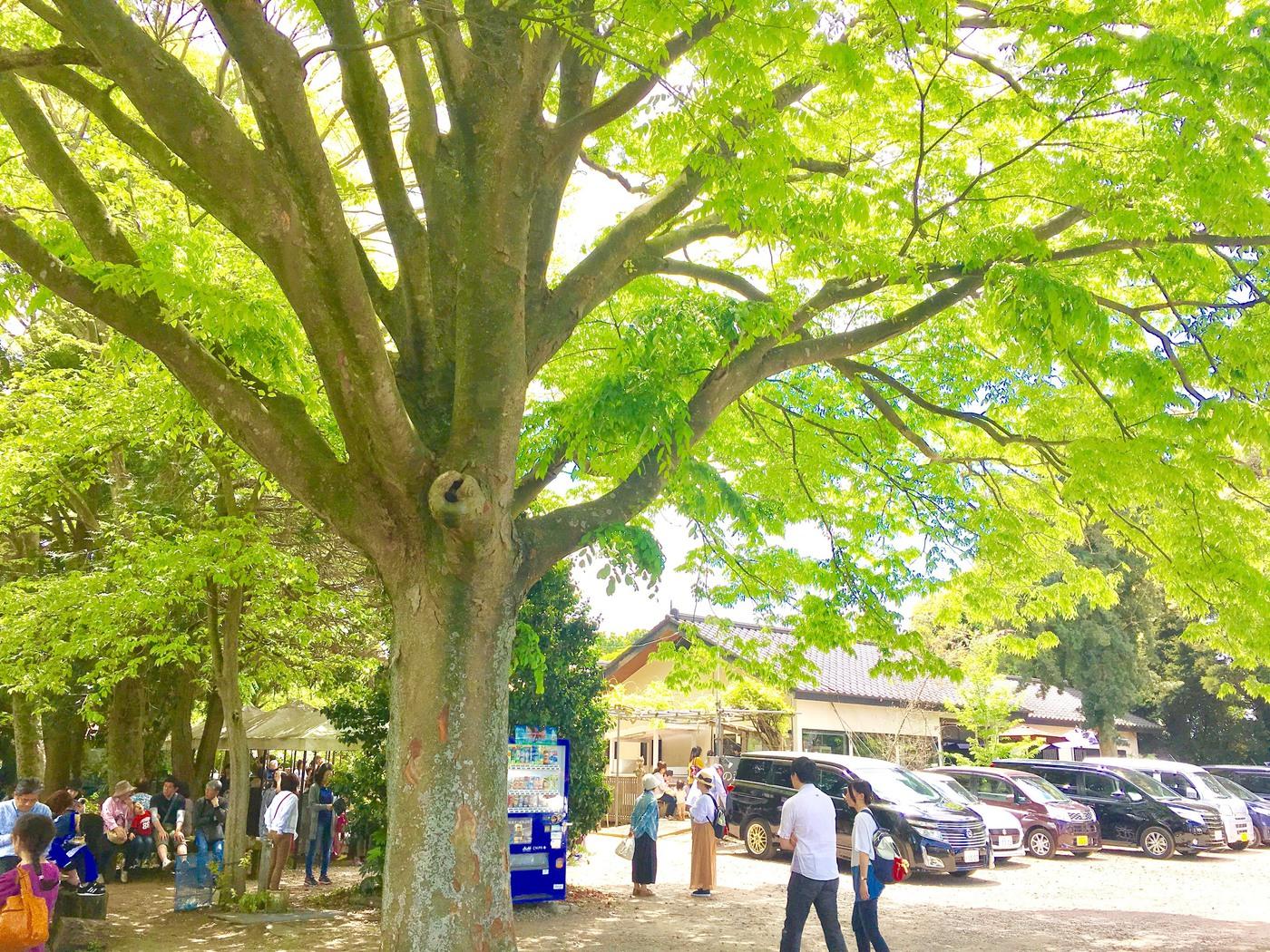 アクアラインから木更津ドライブ♪おすすめスポット4選!の3枚目の画像の画像