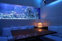 【新宿駅周辺】美しい熱帯魚を眺めながらディナーができるお店4選