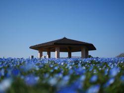 福岡の天神付近で行くべき観光スポット5選☆