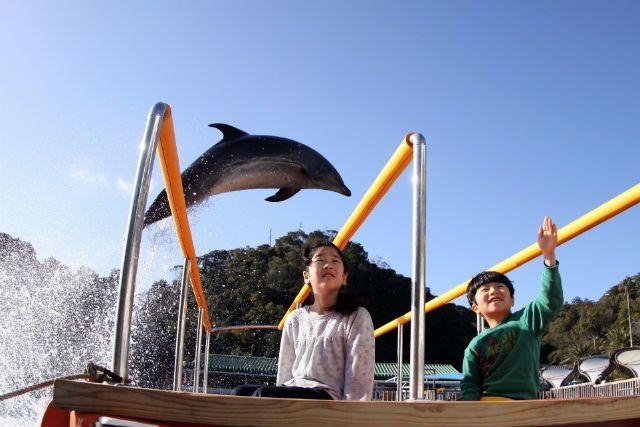 「下田海中水族館」でイルカと一緒に泳ごう!魅力をたっぷりご紹介!の画像