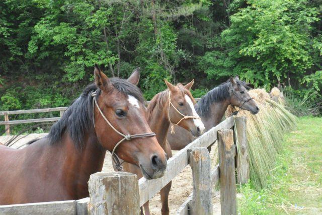 京都の乗馬クラブ5選。初心者から本格派までおすすめのスポット の画像