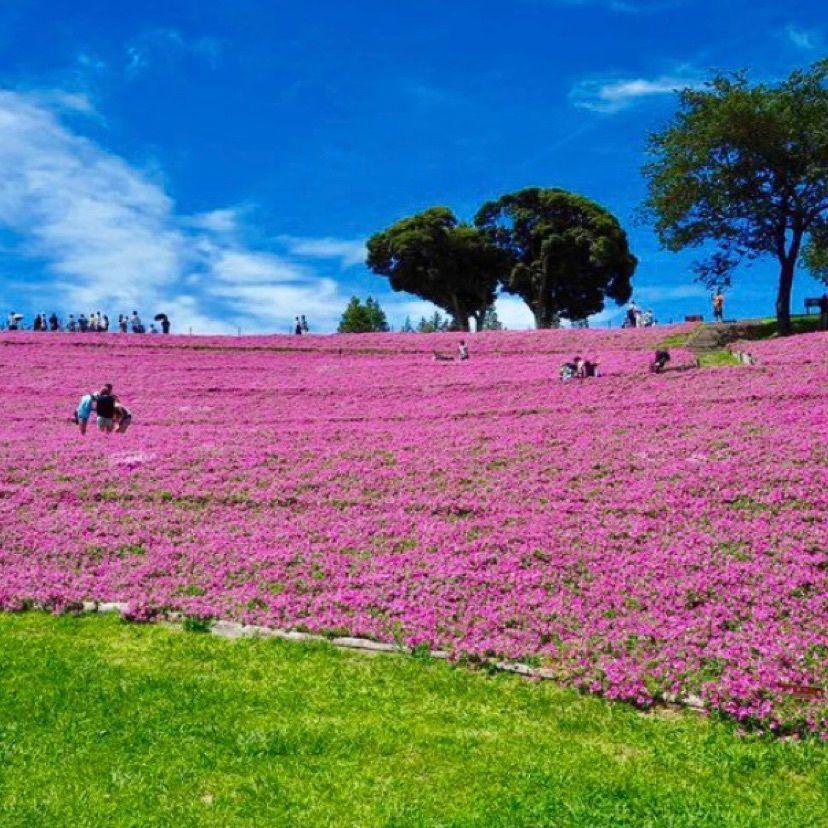 #おでかけ #マザー牧場 #千葉