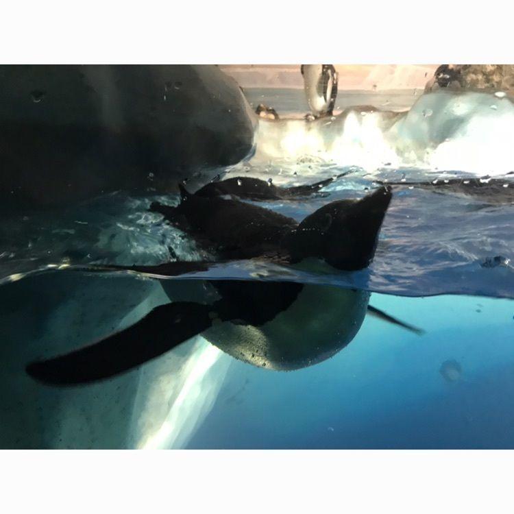 #名古屋港水族館 #ペンギン #可愛い