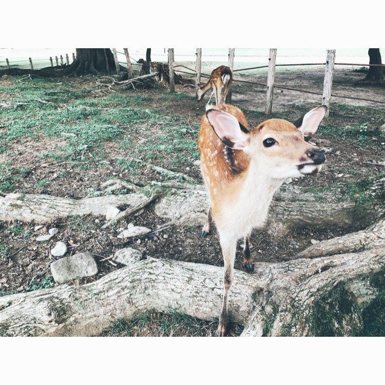 #aumo #aumoおでかけ #関西 #奈良公園 #鹿