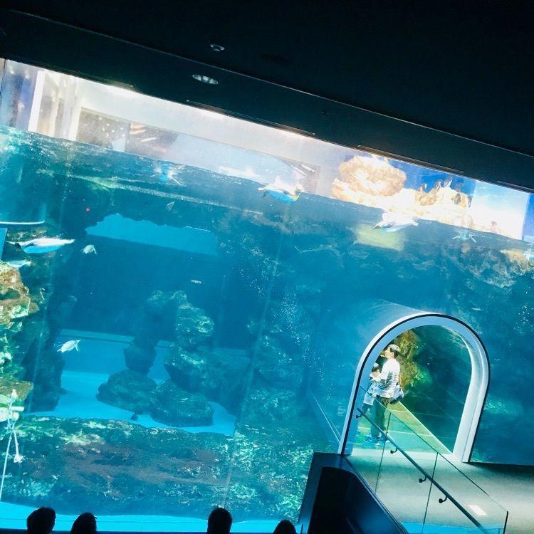 #山口 #水族館 #海響館 #クジラ #本物 #鯨 #魚 #観光 #スポット #海 #家族 #海の中 #トンネル #海の道
