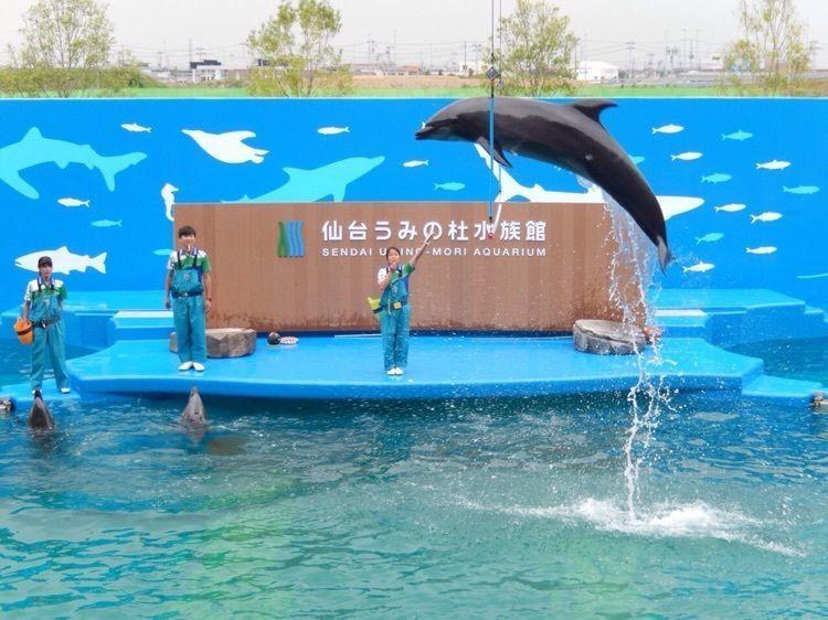 #おでかけ #水族館 #仙台