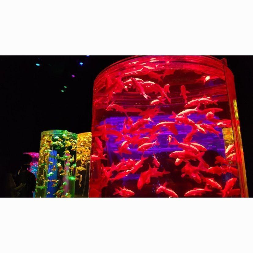 #アートアクアリウム #アートアクアリウム日本橋 #日本橋 #金魚ミュージアム #金魚