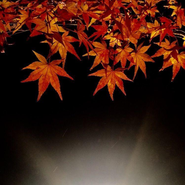 yutakaの画像