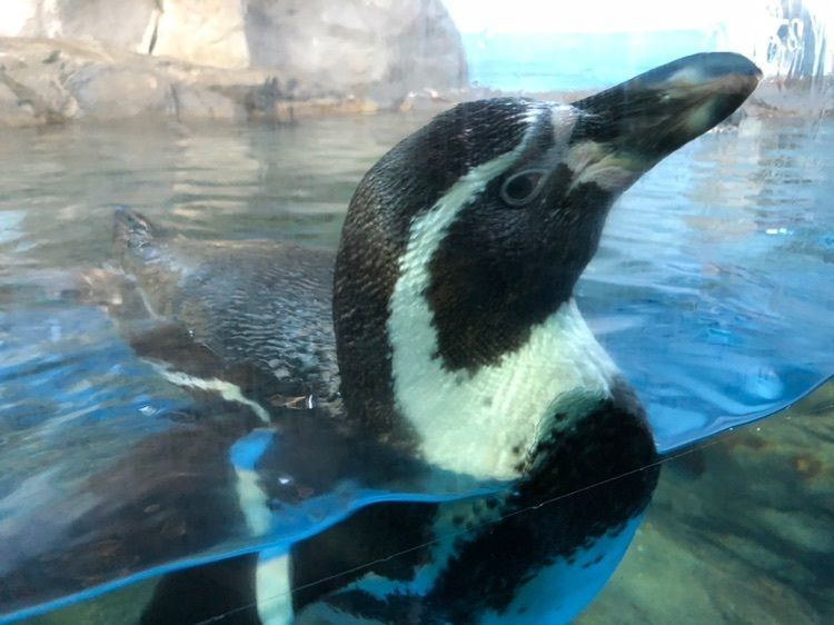 #おでかけ #フォトジェニック #ペンギン