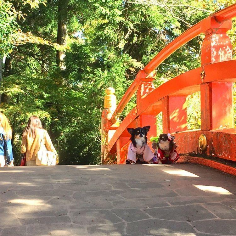 #箱根神社 #箱根 #hakone