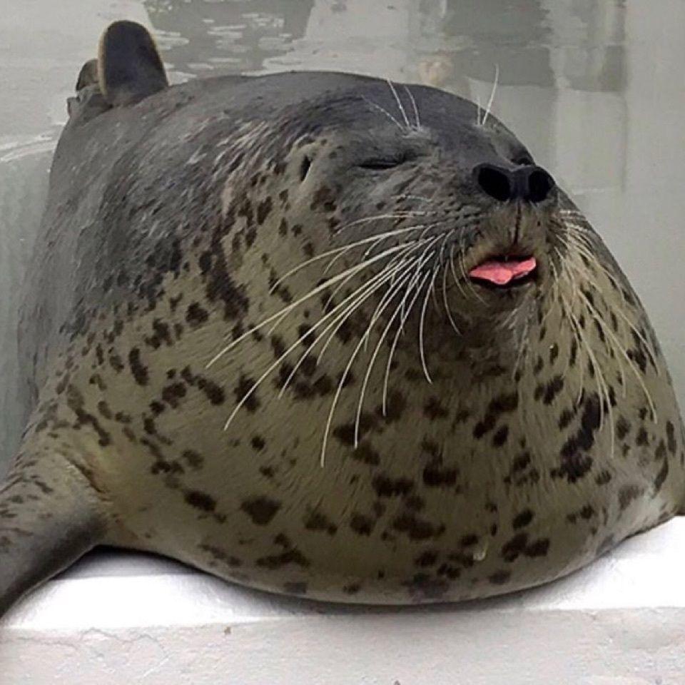 #おでかけ #フォトジェニック #須磨水族館 #アザラシ #可愛い #癒し
