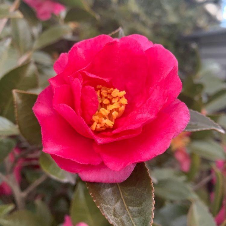 blossom&C7の画像