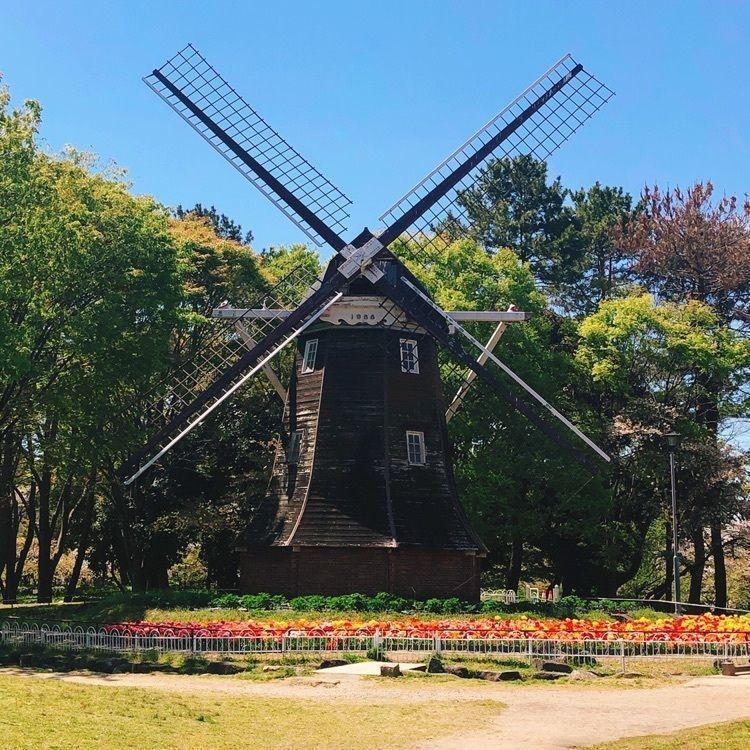 #名城公園 #ネモフィラ #風車 #花 #フォトジェニック #名古屋お出かけスポット #名古屋のお出かけスポット #チューリップ