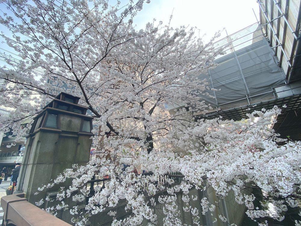 kakkii__の画像