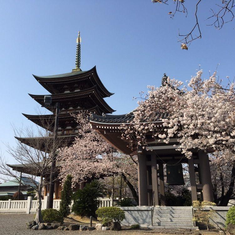 #お寺 #寺院 #名古屋 #桜 #花見 #日泰寺 #五重塔