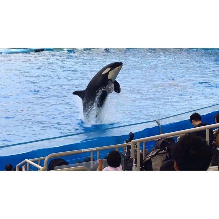 #名古屋 #名古屋港水族館