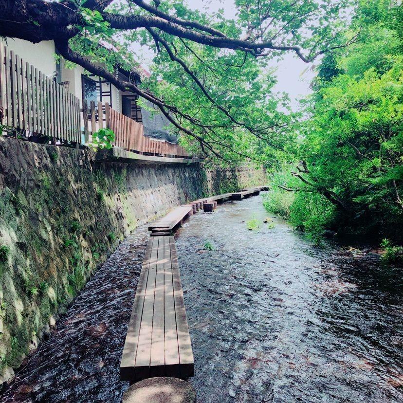 #夏 #おでかけ #源兵衛川 #冷たくて涼しい
