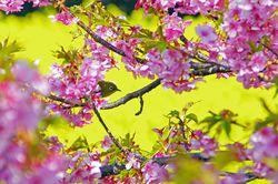 【愛知×花】美しい季節の花をめぐるおすすめスポット!