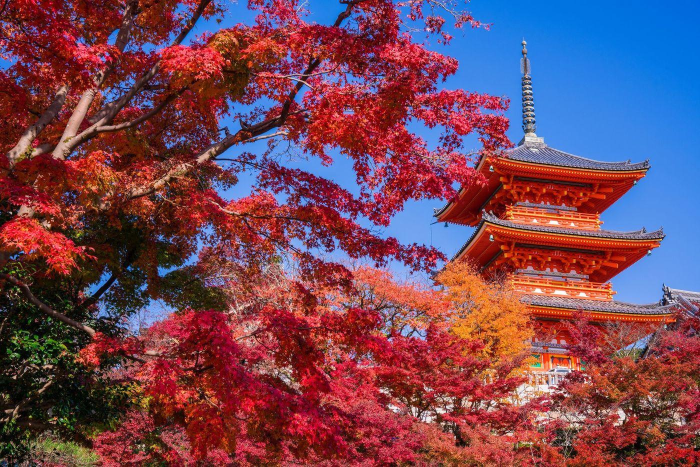 【2020最新】京都で紅葉が堪能できるスポット6選!12月が見頃の画像