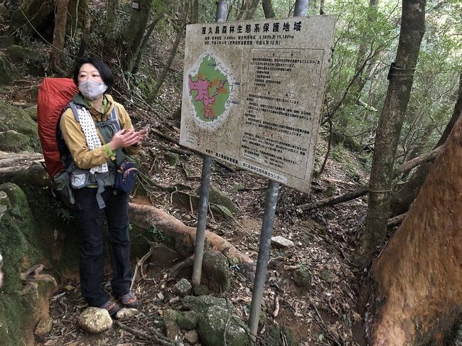 自然の魅力に感動!「奄美大島」と「屋久島」を巡る旅【屋久島編】の画像