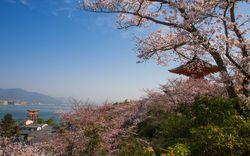 広島でお花見ができる場所はここ!オススメのお花見スポット9選!