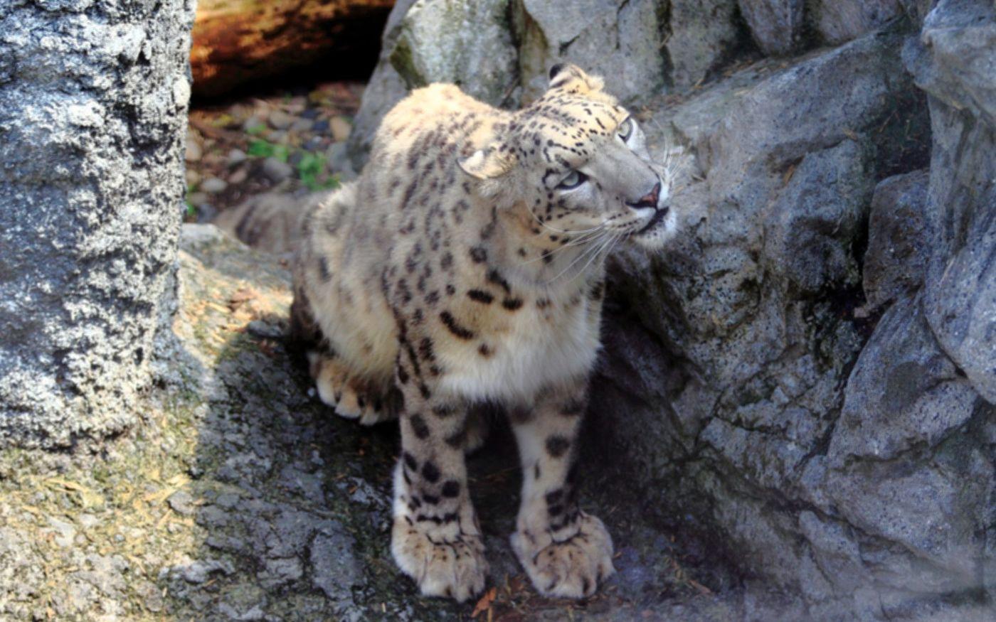 動物園の楽しさ倍増!行くと会える人気動物から珍獣まで大紹介!の画像