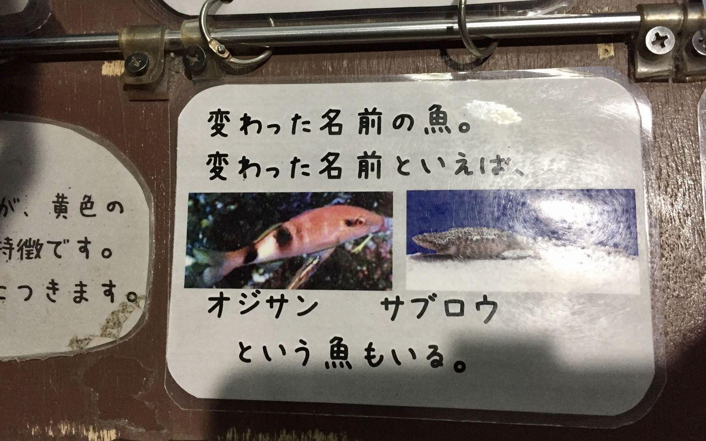 【2020】おたる水族館を徹底紹介!他とは一味違うその魅力とは?の画像