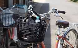 猫だけじゃない!自転車で周る魅力いっぱい男木島観光☆