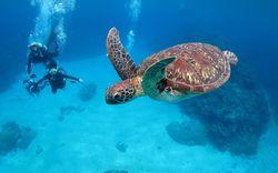 【沖縄シュノーケリング】海の神秘に近づく瞬間