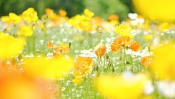 【大阪】季節を感じる♡絶景お花スポット5選